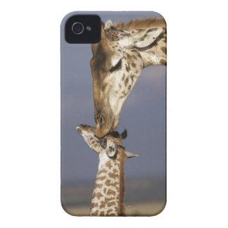 Africa Kenya Masai Mara Giraffes Giraffe iPhone 4 Cover
