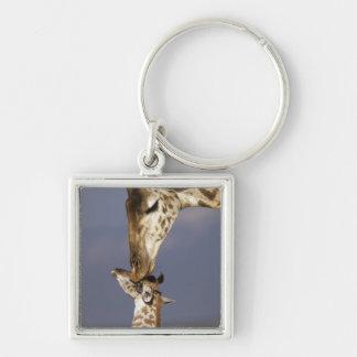 Africa, Kenya, Masai Mara. Giraffes (Giraffe Keychain