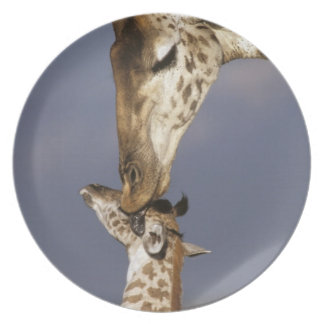 Africa, Kenya, Masai Mara. Giraffes (Giraffe Melamine Plate
