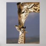 Africa, Kenya, Masai Mara. Giraffes (Giraffe Print