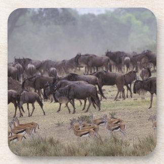 Africa, Kenya, Masai Mara. Herds of Gazelle, Beverage Coaster