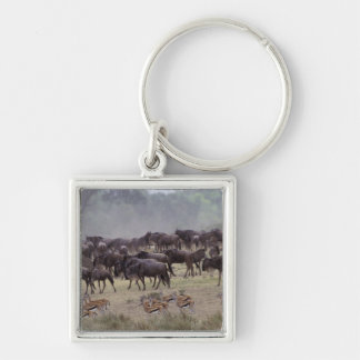 Africa, Kenya, Masai Mara. Herds of Gazelle, Keychain