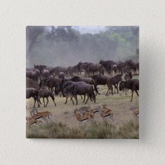 Africa, Kenya, Masai Mara. Herds of Gazelle, Pinback Button