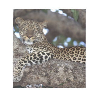 Africa. Kenya. Masai Mara. Leopard (Panthera Notepad