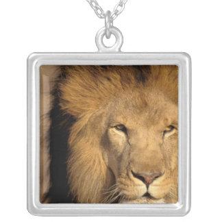 Africa, Kenya, Masai Mara. Lion male (Panthera Personalized Necklace