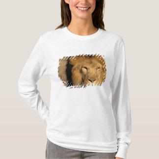 Africa, Kenya, Masai Mara. Lion male (Panthera T-Shirt