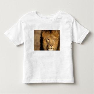 Africa, Kenya, Masai Mara. Lion male (Panthera Toddler T-shirt