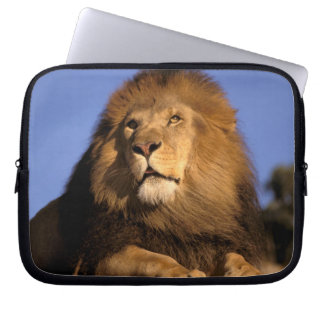 Africa, Kenya, Masai Mara. Male lion (Panthera Laptop Sleeve
