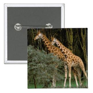 Africa, Kenya, Masai Mara. Masai giraffe Button