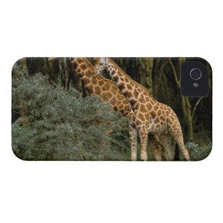 Africa Kenya Masai Mara Masai giraffe Blackberry Bold Cover