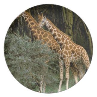 Africa, Kenya, Masai Mara. Masai giraffe Dinner Plate