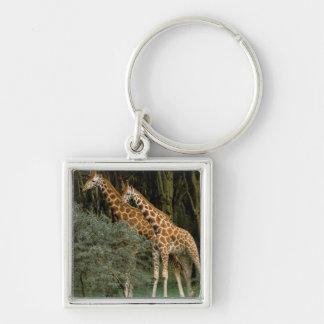 Africa, Kenya, Masai Mara. Masai giraffe Keychain
