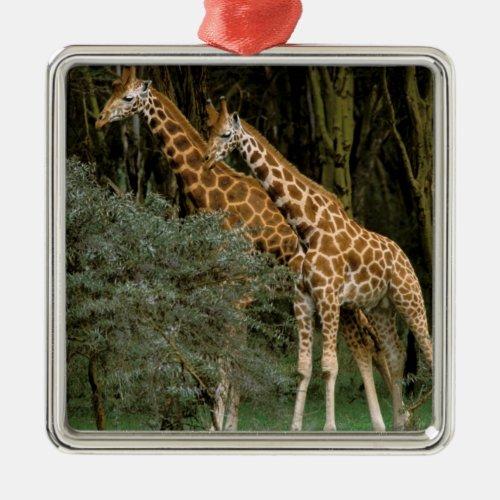 Africa Kenya Masai Mara Masai giraffe Metal Ornament