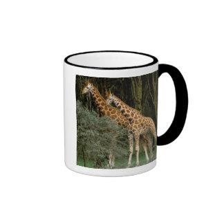 Africa, Kenya, Masai Mara. Masai giraffe Coffee Mug