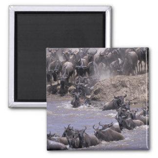 Africa, Kenya, Masai Mara National Park. Magnet