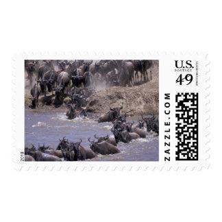Africa, Kenya, Masai Mara National Park. Postage Stamp