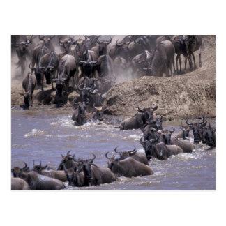 Africa, Kenya, Masai Mara National Park. Post Cards