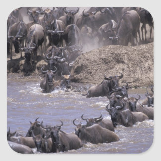 Africa, Kenya, Masai Mara National Park. Square Sticker