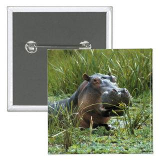 Africa, Kenya, Masai Mara NR. A mother hippo and Pin