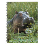 Africa, Kenya, Masai Mara NR. A mother hippo and Spiral Note Book