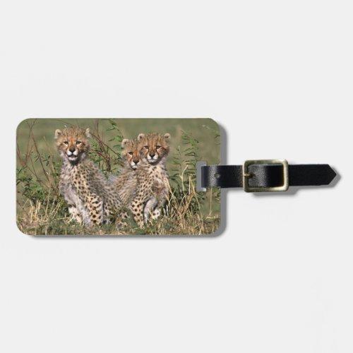 Africa Kenya Masai Mara Three cheetah cubs Luggage Tag