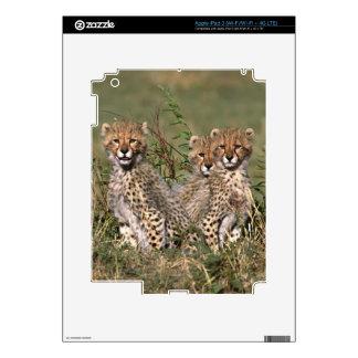 Africa; Kenya; Masai Mara; Three cheetah cubs Decals For iPad 3