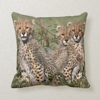 Africa; Kenya; Masai Mara; Three cheetah cubs Throw Pillow