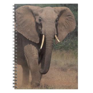 Africa, Kenya, Nanyuki, Mpala. African Elephant. Notebook