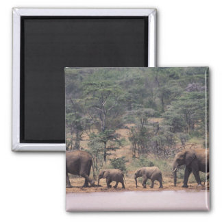 Africa, Kenya, Nanyuki, Mpala. African Magnet