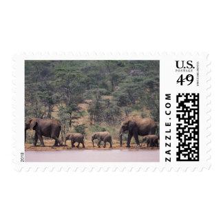 Africa, Kenya, Nanyuki, Mpala. African Postage Stamps