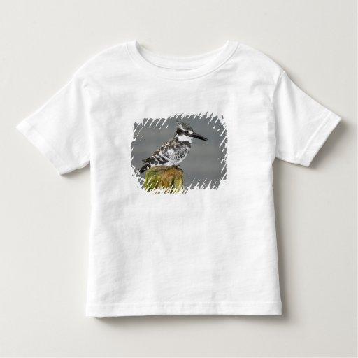 Africa. Kenya. Pied Kingfisher at Lake Naivasha. Toddler T-shirt