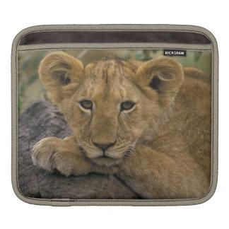 Africa, Kenya. Portrait of a lion. iPad Sleeve