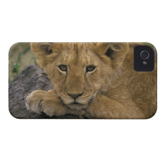 Africa, Kenya. Portrait of a lion. iPhone 4 Covers