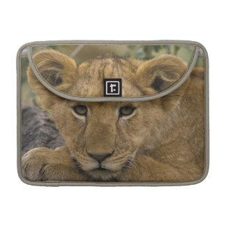 Africa, Kenya. Portrait of a lion. Sleeves For MacBooks