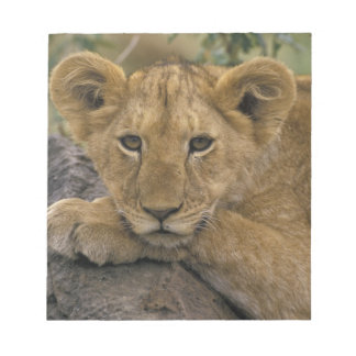 Africa, Kenya. Portrait of a lion. Notepad