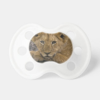 Africa, Kenya. Portrait of a lion. Baby Pacifiers