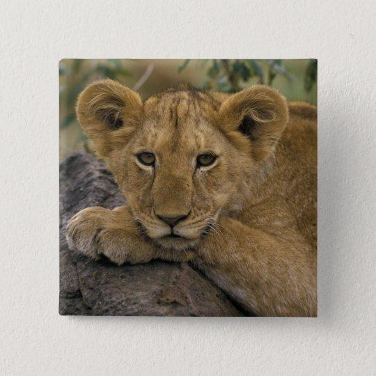 Africa, Kenya. Portrait of a lion. Pinback Button