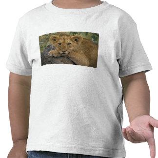 Africa, Kenya. Portrait of a lion. Tees