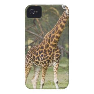 Africa Kenya Rothschild s Giraffe at Lake 2 Blackberry Bold Cases