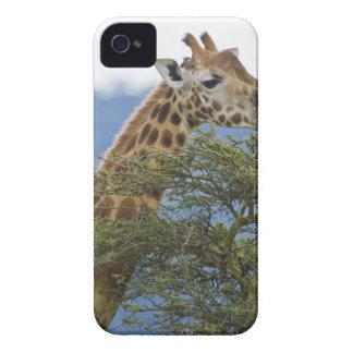 Africa Kenya Rothschild s Giraffe at Lake Blackberry Cases