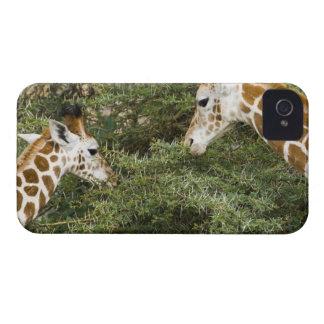 Africa Kenya Rothschild s Giraffes at Lake Blackberry Case