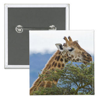 Africa. Kenya. Rothschild's Giraffe at Lake 2 Inch Square Button