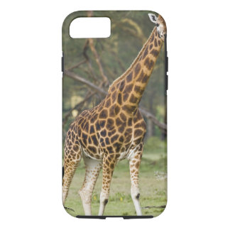 Africa. Kenya. Rothschild's Giraffe at Lake 2 iPhone 7 Case