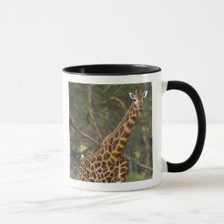 Africa. Kenya. Rothschild's Giraffe at Lake 2 Mug