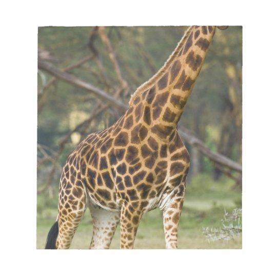 Africa. Kenya. Rothschild's Giraffe at Lake 2 Notepad