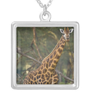 Africa. Kenya. Rothschild's Giraffe at Lake 2 Silver Plated Necklace