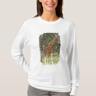 Africa. Kenya. Rothschild's Giraffe at Lake 2 T-Shirt