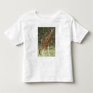Africa. Kenya. Rothschild's Giraffe at Lake 2 Toddler T-shirt