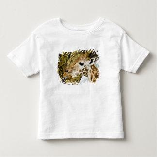 Africa. Kenya. Rothschild's Giraffe at Lake 3 Toddler T-shirt