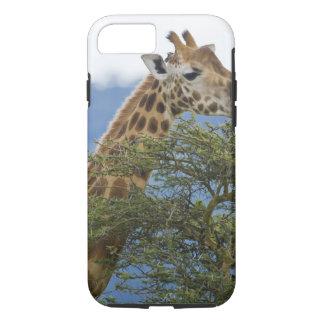 Africa. Kenya. Rothschild's Giraffe at Lake iPhone 7 Case